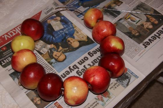 Tre bare epler på en tykk ståltråd.