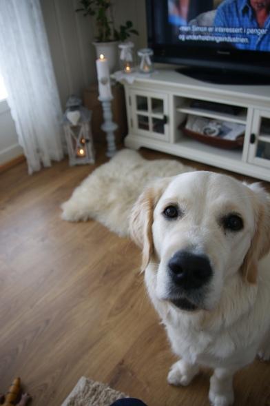 Jeg har en nysgjerring liten hund som helst vil være med på det meste!